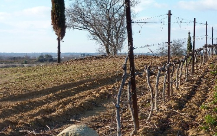 condamine vignoble 500x600